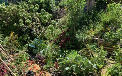 Récits de jardinier.e.s à La Réunion