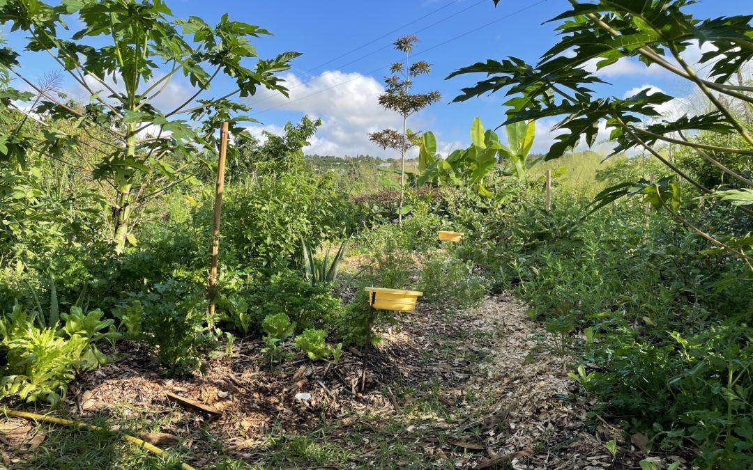 De belles récoltes au jardin expérimental !